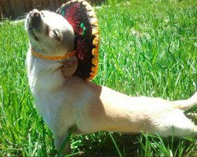 cute-funny-pic-dog